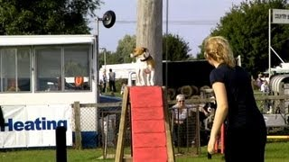 Dog Agility Clips From Newbury Show 2013