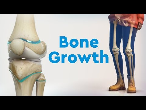 Bone Growth and Limb Deformities