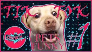 Видео прикол про животных! [Тик Ток!] Смешные Домашние Животные! Приколы на Тик Ток! (2019) #1!