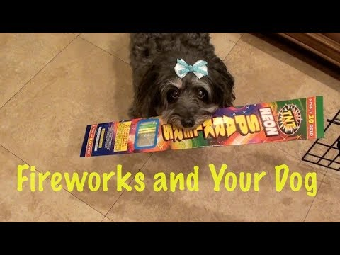 Smart Dog's Survival Guide to 4th of July.   (Pet Safety Tips)