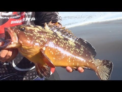 ASFN Rock & Surf - Scratching For Edibles On Light Tackle At Cape Vidal