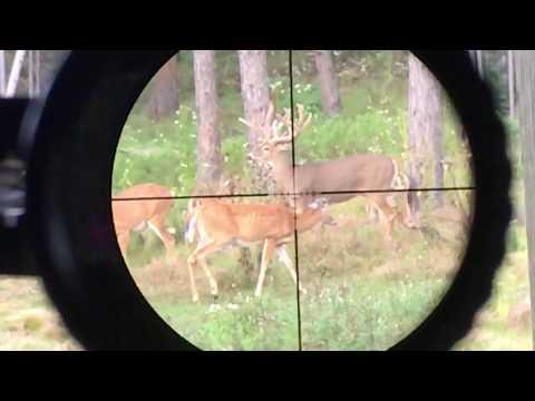 MONSTER Buck Harvest - Instant Drop Scope View
