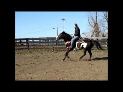 BLACK & WHITE OVERO PAINT GELDING