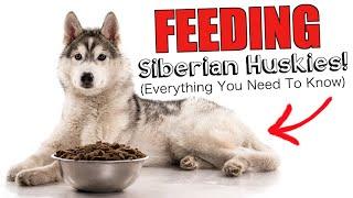 Feeding Siberian Huskies! (EVERYTHING YOU NEED TO KNOW)