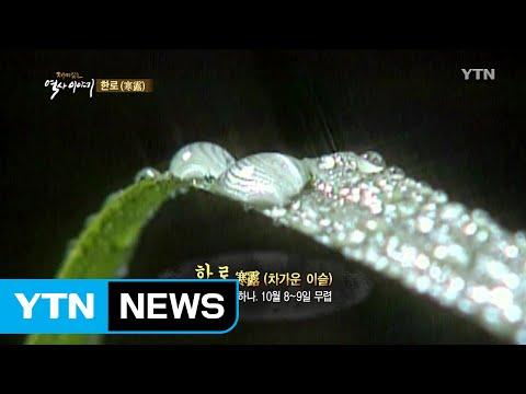'한로'에 기러기를 기다린 이유 / YTN (Yes! Top News)