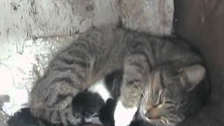 Кошка и её котята.wmv