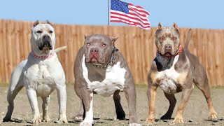 These Are American's Most Favorite Dog Breeds