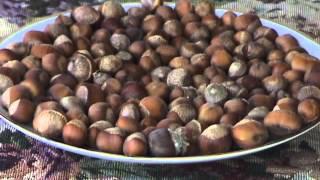 Edible Nuts:Hazelnut