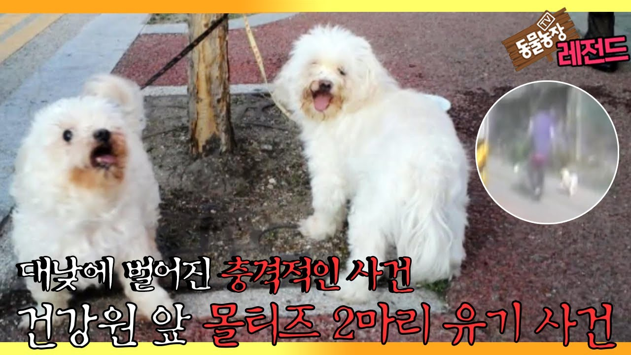 [TV 동물농장 레전드] '대낮에 벌어진 몰티즈 2마리 유기 사건' 풀버전 다시보기 I TV동물농장 (Animal Farm)   SBS Story