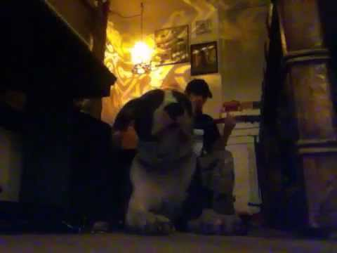 BEST SINGING DOG EVER!!!!