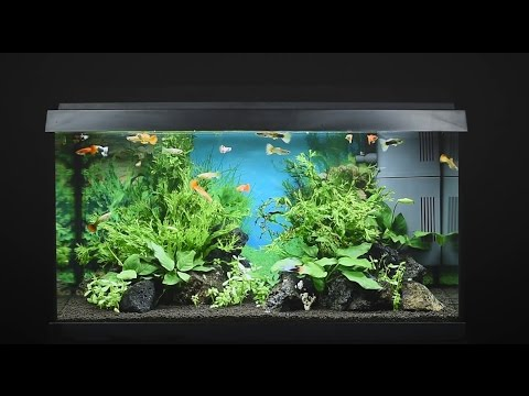 juwel aquarium primo 60 60l einrichtungsbeispiel tutorial youtube. Black Bedroom Furniture Sets. Home Design Ideas