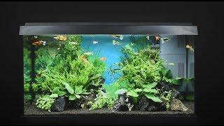 Juwel Aquarium Primo 60 - 60l Einrichtungsbeispiel / Tutorial