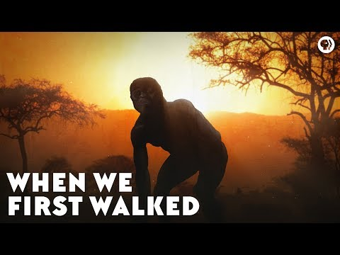 When We First Walked