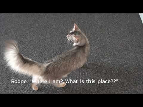 Funny cats and kittens videos | FunnyCat TV