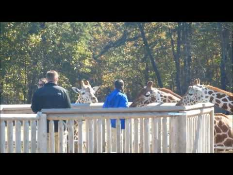 Six Flags Great Adventure: Safari Off Road Adventure 1080p