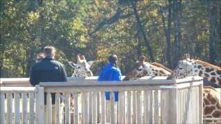 Six Flags Great Adventure: Safari Off Road Adventure 1080p