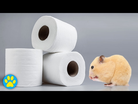 Using Tissue In Pet Cages | Tissue 101