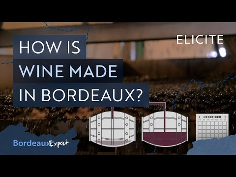 Red Winemaking In Bordeaux Explained