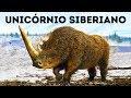 Cientistas Estão Prontos Para Ressuscitar 10 Animais Extintos