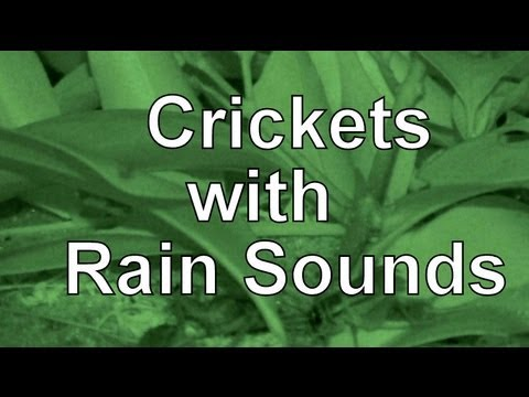 """Rain Sounds with Crickets 2hrs """"Natural Sound"""""""
