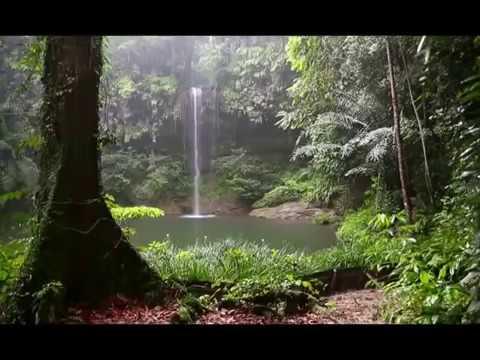 Звуки леса  Пение птиц  Журчание водопада и Шум дождя  90 минут!