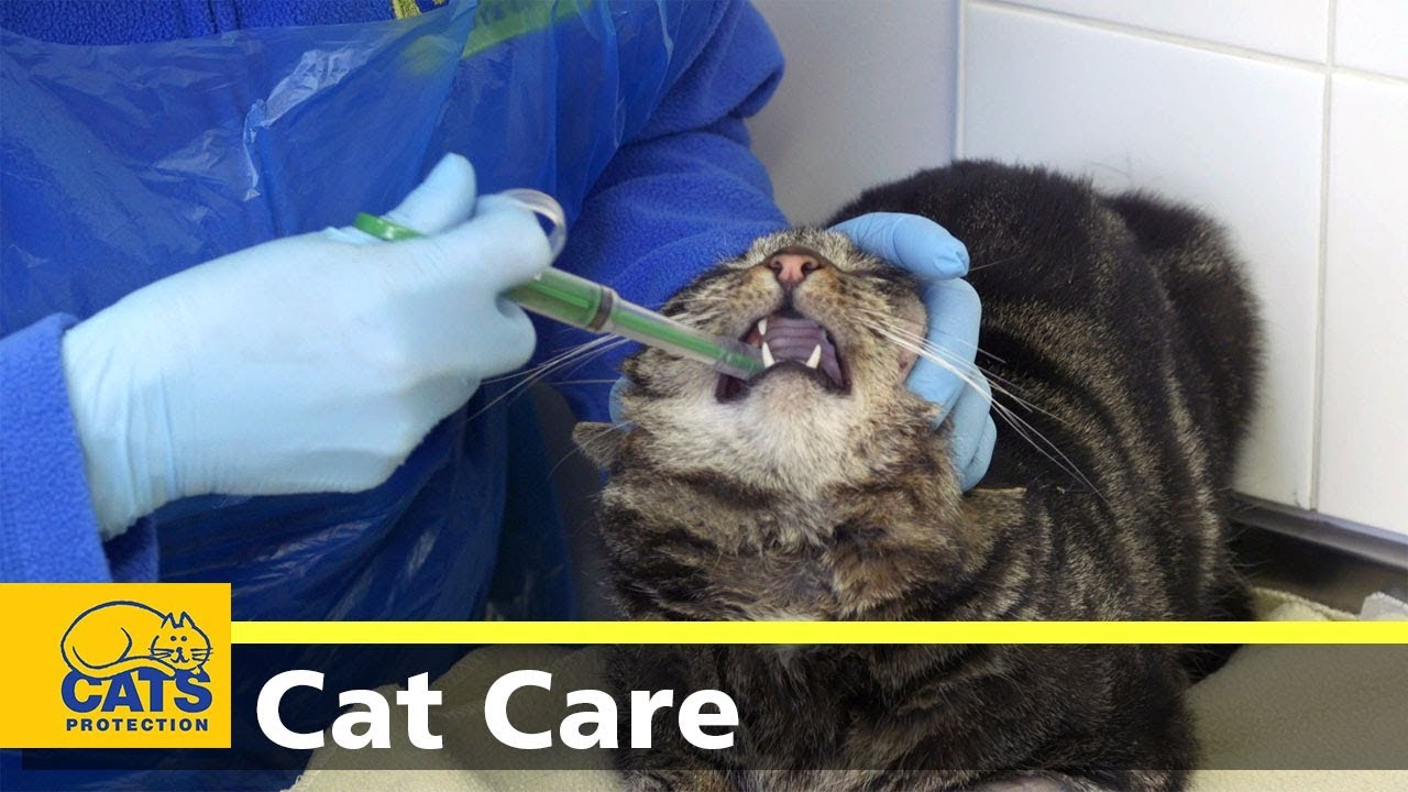 Youtube How To Give Your Cat A Pill