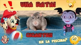 Una RATA ENORME en la PISCINA! Paw Patrol  y Vampirina/ Juguetes en español