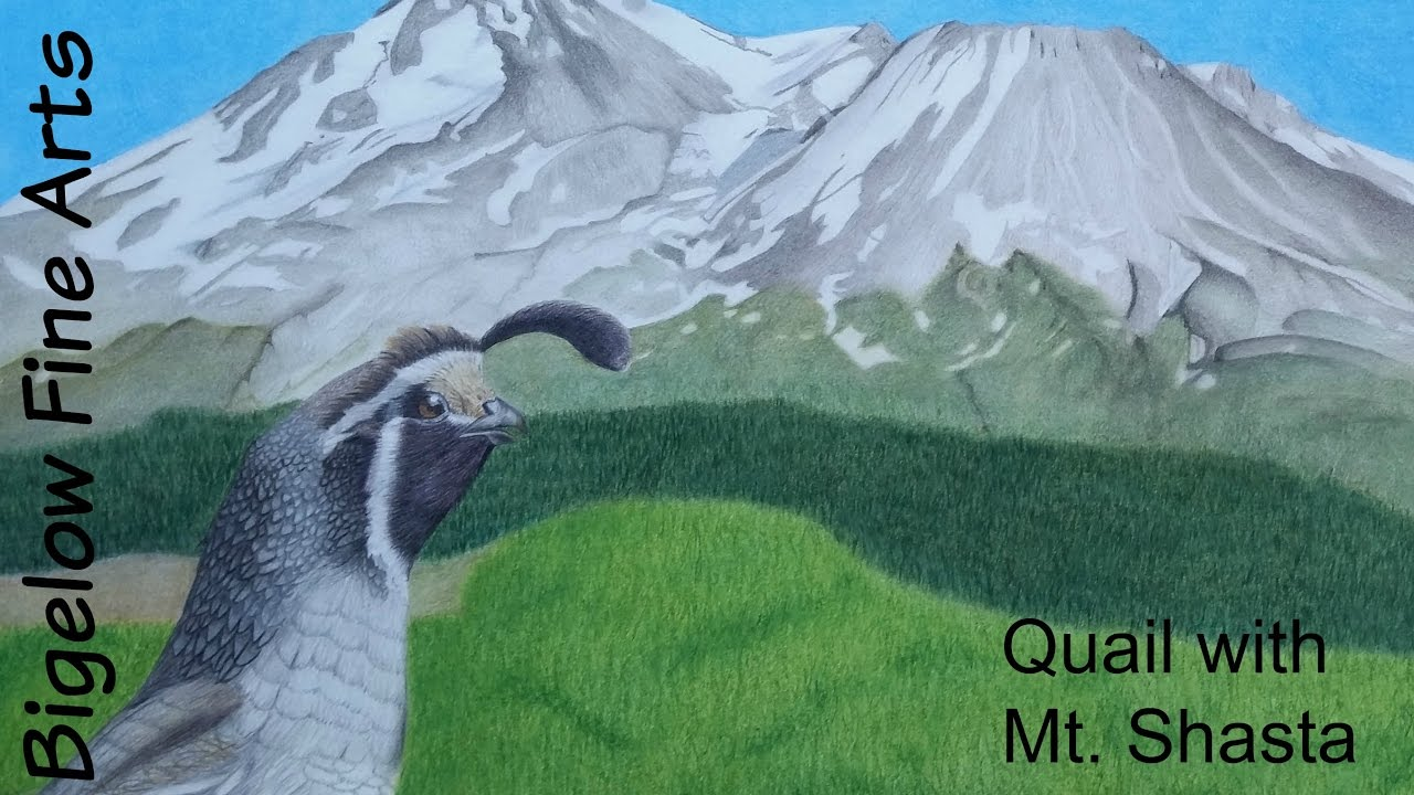 Time Lapse Drawing: Quail With Mt Shasta