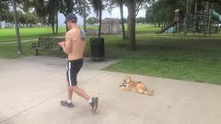 Riley the Shiba Inu | Training at Park