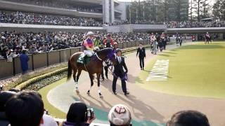 20110219 ダイヤモンドステークス パドック コスモメドウ