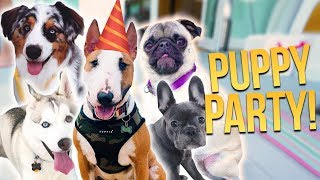 FIRST PUPPY BIRTHDAY!! (24 Hour Live Stream Giveaway)