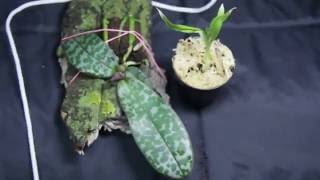 новые орхидеи заказ в интернет закупках, посылка почтой