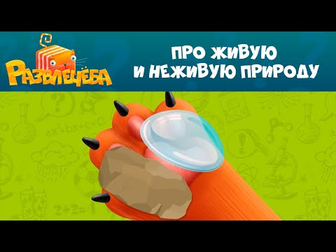 """Кот Кубокот и """"Развлечёба"""" на СТС Kids! Серия 5"""