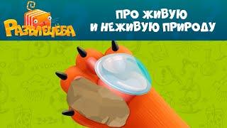 Кот Кубокот и Развлечёба на СТС Kids! Серия 5
