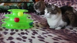 The best toys for cats. Лучшие игрушки для кошек