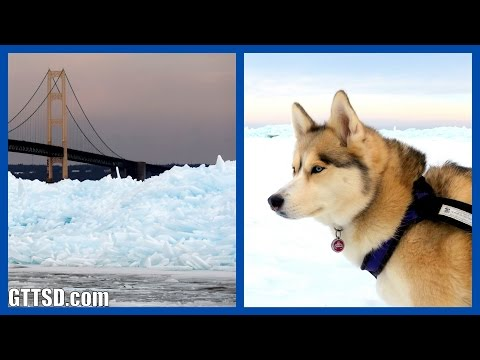 huskies-and-blue-ice-|-mackinac-bridge-blue-glacial-ice