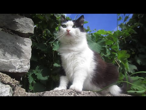Montenegro Travel Guide - Cat, Dog and Turtle