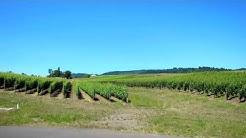 Adelsheim Vineyard - Newberg, Oregon