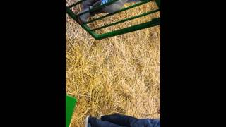 Gambar cover Nev saanen yonticileri.koyun suni tohumlama yeni(3