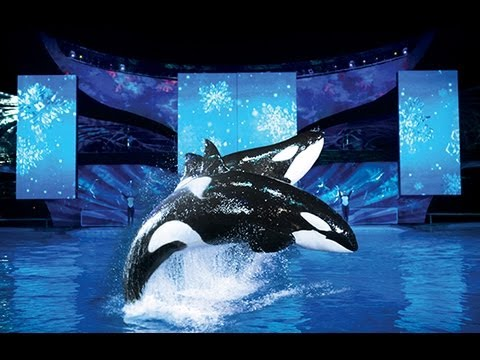 Christmas At Sea World Orlando!!! (11.12.12)