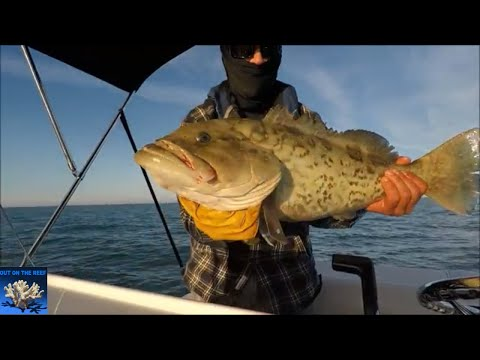 Clearwater Reef Fishing Grouper Gulf Of Mexico Florida Coast