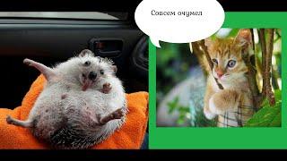 Смешные домашние животные поднимут вам настроение