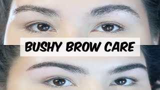Brow Routine for Bushy Eyebrows || MAP Beauty
