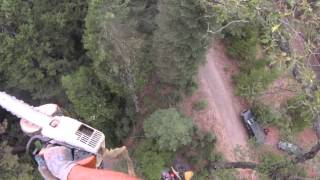 Tree Removal in Nevada County