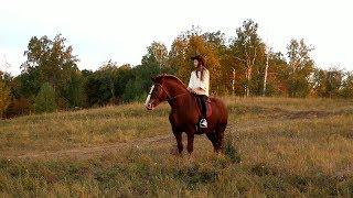 Кататься на лошади. Как научиться ездить верхом? Верховая прогулка в лесу впервые в жизни.