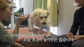 세상에 나쁜 개는 없다 - 2층에 갇혀 사는 개 보리_#002