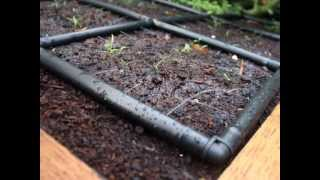 How To Build A Raised Garden W/ Irrigation In 5 Minutes - Gardeninminutes.com