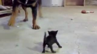 Усыпить собаку на дому