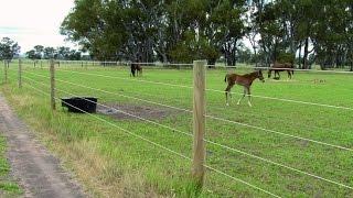 Projet  Clôture électrique chevaux  - Vidéo Horse Stop