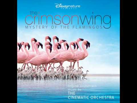 The Cinematic Orchestra - Arrival Of The Birds